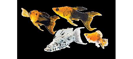 Мир Аквариумов, Все для аквариумов в том числе и мебель